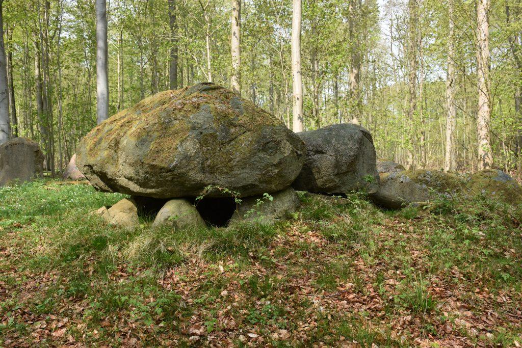 Frejlev Skov. Foto Søren Faaborg Nielsen